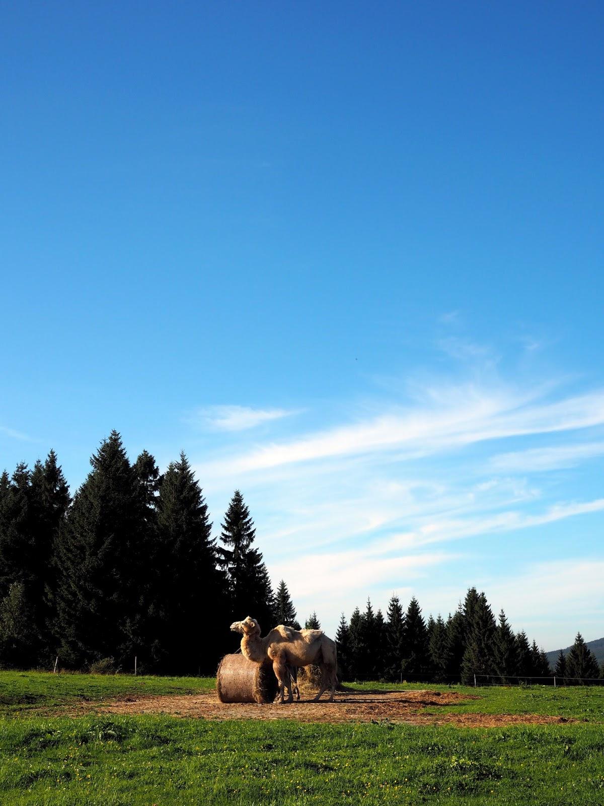 prezidentská chata jizerské hory
